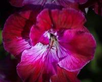Giacimenti di fiore a Carlsbad Fotografia Stock