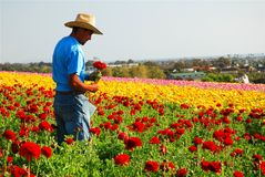 Giacimenti di fiore di Carlsbad fotografie stock libere da diritti