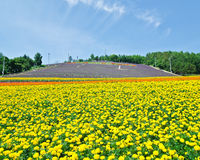 Giacimenti di fiore di Furano e di Biei, Hokkaido, Giappone Immagini Stock Libere da Diritti