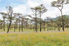 Giacimenti di fiore gialli con il fondo del cielo blu e della montagna Fotografia Stock
