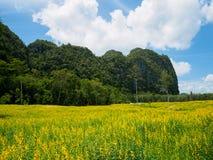 Giacimenti di fiore gialli montagna e fondo del cielo blu Fotografia Stock