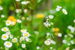 Giacimenti di fiore nel villaggio di Shirakawago Fotografia Stock Libera da Diritti