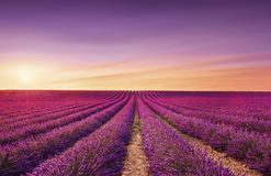 Giacimenti di fioritura dei fiori della lavanda al tramonto Valensole, Provenza, Francia fotografia stock