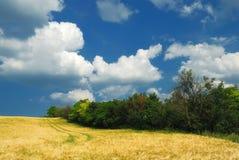Giacimenti di grano Fotografia Stock
