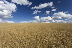 Giacimenti di grano immagine stock libera da diritti