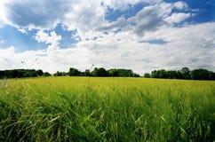 Giacimenti di grano agricoli Ora legale in una natura Ambiti di provenienza: indicatore luminoso del sole Campi verdi e tempo ven Fotografia Stock Libera da Diritti