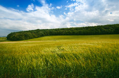 Giacimenti di grano agricoli Ora legale in una natura Ambiti di provenienza: indicatore luminoso del sole Campi verdi e tempo ven Fotografia Stock