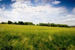 Giacimenti di grano agricoli Ora legale in una natura Ambiti di provenienza: indicatore luminoso del sole Campi verdi e tempo ven Immagini Stock