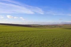 Giacimenti di grano dei wolds di Yorkshire Fotografia Stock Libera da Diritti