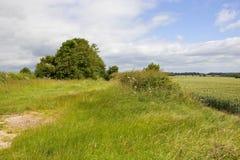 Giacimenti di grano e bridleway Immagine Stock