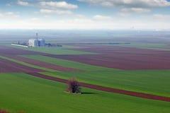 Giacimenti di grano e paesaggio arati e verdi del carro armato del grano Immagine Stock