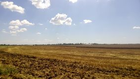 Giacimenti di grano Estate nel campo Agricoltura in Kuban Immagine Stock