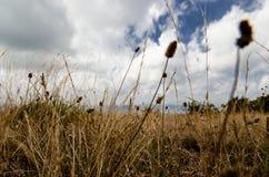 Giacimenti di grano in montagna della Spagna fotografie stock