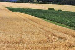 Giacimenti di grano nelle montagne della Germania Fotografia Stock