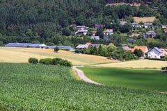 Giacimenti di grano nelle montagne della Germania, Bodingheim Fotografia Stock