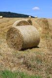 Giacimenti di grano nelle montagne della Germania, Hettigenbeuern Immagini Stock