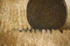Giacimenti di grano nelle montagne della Germania, Hettigenbeuern Immagine Stock