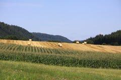 Giacimenti di grano nelle montagne della Germania, Hettigenbeuern Fotografia Stock