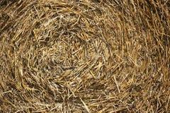 Giacimenti di grano nelle montagne della Germania, Hettigenbeuern Fotografie Stock