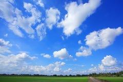 Giacimenti e cielo del riso Immagine Stock Libera da Diritti