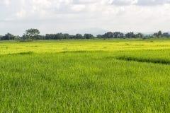 Giacimenti e cielo verdi della natura Fotografia Stock Libera da Diritti