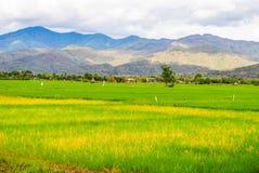 Giacimenti e montagne del riso Immagini Stock Libere da Diritti