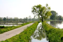 Giacimenti in Lomellina, Italia del riso Fotografie Stock Libere da Diritti