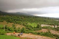 Giacimenti pittoreschi del riso del kangra India Fotografia Stock Libera da Diritti