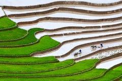 Giacimenti a terrazze del riso Fotografia Stock
