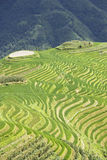 Giacimenti a terrazze del riso di Longji Fotografie Stock Libere da Diritti