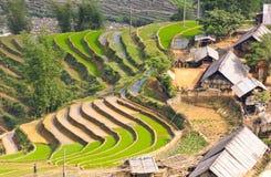 Giacimenti a terrazze del riso di Sapa immagine stock libera da diritti