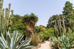 Giacimenti verdi del cactus Fotografie Stock