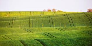Giacimenti verdi della primavera sulle colline Vista ondulata della molla di agricoltura Spri Fotografie Stock Libere da Diritti