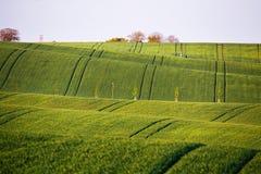 Giacimenti verdi della sorgente Il raccolto verde di agricoltura Colline della primavera e fi Fotografie Stock