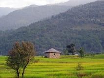 Giacimenti verdi e punto del riso che coltivano l'India Immagini Stock Libere da Diritti