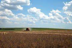 Giacimento agricolo della soia di raccolto meccanico immagine stock