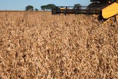 Giacimento agricolo della soia di raccolto meccanico fotografia stock libera da diritti