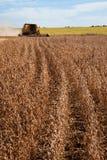 Giacimento agricolo della soia di raccolto meccanico fotografie stock