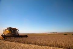 Giacimento agricolo della soia di raccolto meccanico Fotografie Stock Libere da Diritti