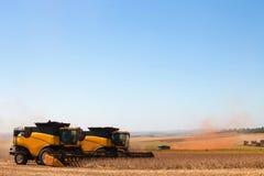 Giacimento agricolo della soia di raccolto meccanico immagine stock libera da diritti
