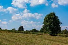 Giacimento caldo del cielo blu dell'albero del paesaggio di estate calda sola all'aperto Immagine Stock Libera da Diritti