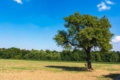 Giacimento caldo del cielo blu dell'albero del paesaggio di estate calda sola all'aperto Fotografia Stock