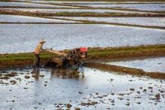 Giacimento d'aratura del riso dell'agricoltore asiatico con la macchina del trattore immagine stock
