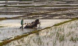 Giacimento d'aratura del riso dell'agricoltore asiatico con la macchina del trattore immagini stock libere da diritti