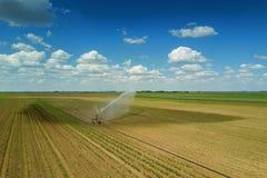 Giacimento d'innaffiatura dell'attrezzatura di irrigazione Siluetta dell'uomo Cowering di affari irrigazione Fotografia Stock Libera da Diritti