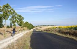 Giacimento dei girasoli e della strada Fotografie Stock Libere da Diritti