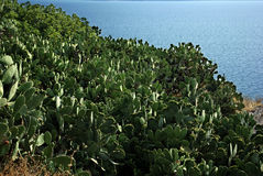Giacimento del cactus Fotografie Stock Libere da Diritti