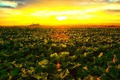 Giacimento del Canola al tramonto Immagini Stock Libere da Diritti