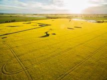Giacimento del Canola al tramonto d'ardore in Australia Immagini Stock