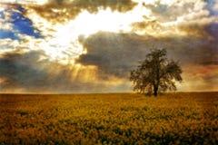 Giacimento del Canola con l'albero Fotografie Stock Libere da Diritti